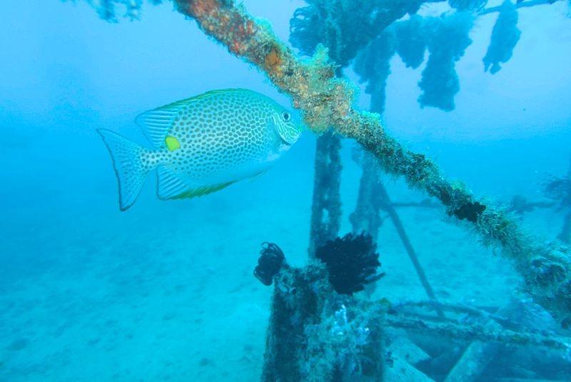 潛水在馬來西亞。自然和種類的魚。太棒了。Diving in Malaysia with nature and nice variety of fish, excellent!!