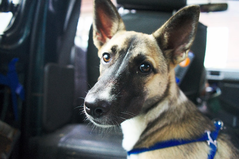 Dog is mans best friend. Ziran mascot.  狗是男生最朋友 。自然吉祥物。